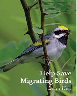 help save migrating birds