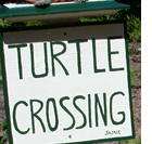 photo of turtle crossing sign