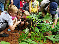 kids looking at woodland vegetation with interpreter